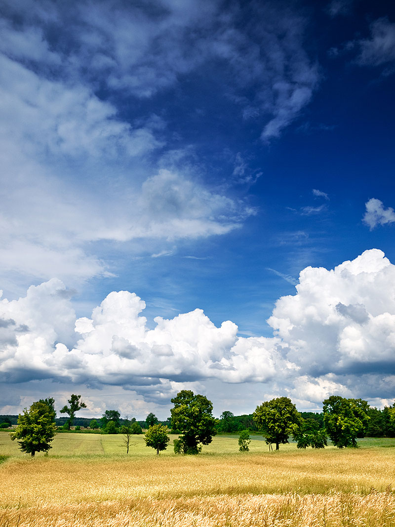 meadow sky and trees